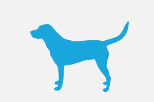 Krankheiten-kategorie-hund