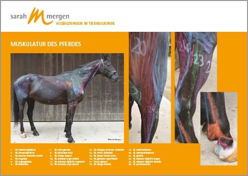 Anatomieposter Pferd