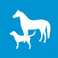 icon-magnetfeld-therapie-pferd-hund-tiere