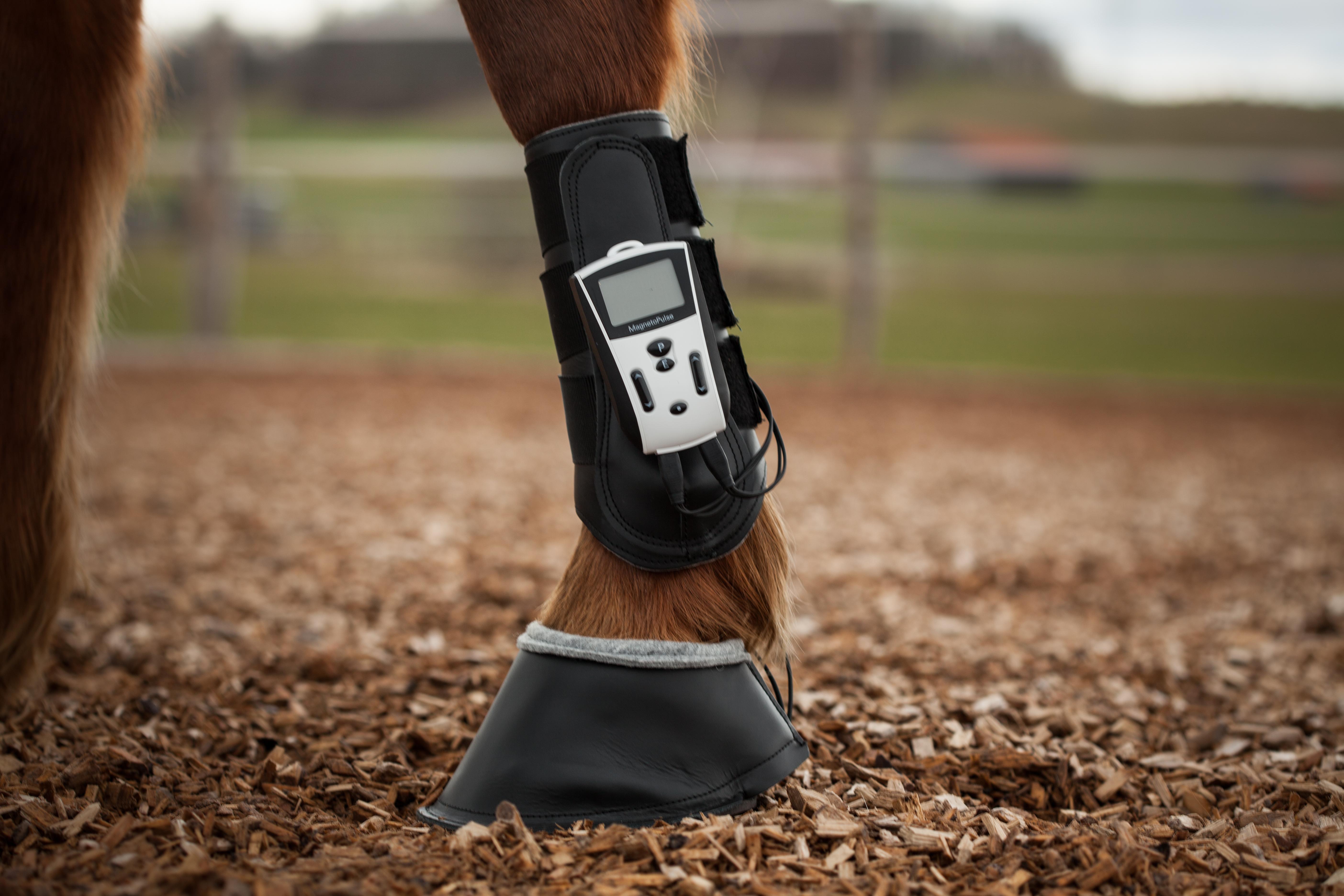 Huferkrankungen Pferd