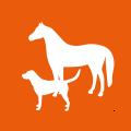icon-licht-waerme-therapie-pferd-hund-tiere