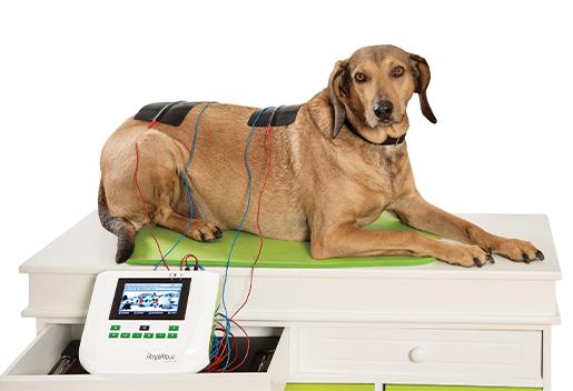 knop-amplimove-mit-hund