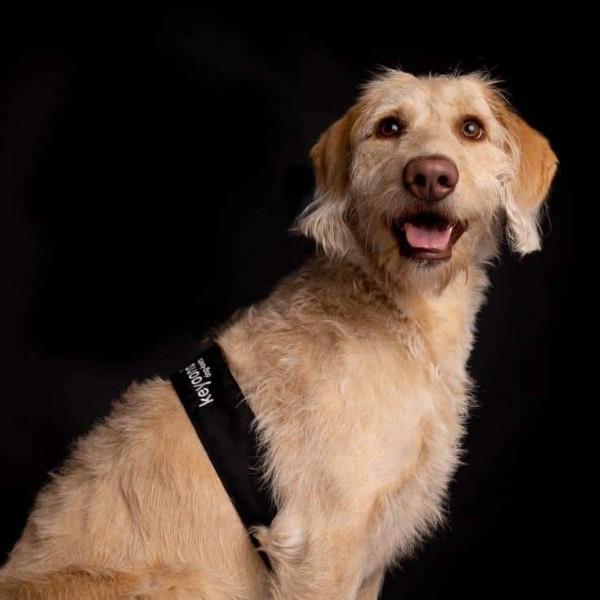 keyoona - dog-beats - Entspannung für Hunde