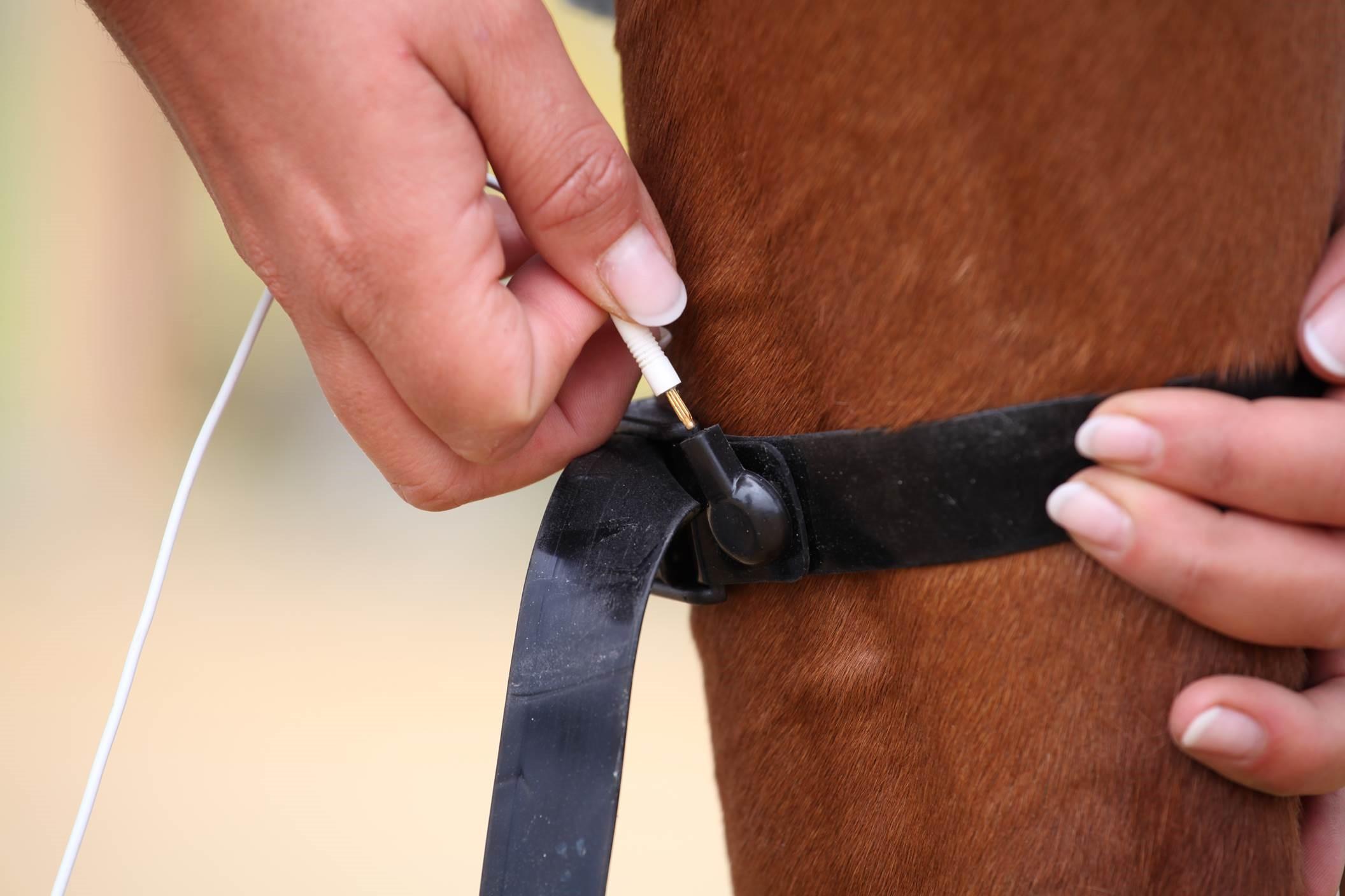 Diagnose Spat beim Pferd