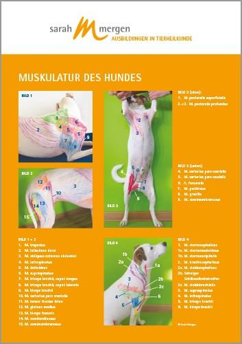 Anatomieposter Hund