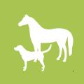 icon-elektro-therapie-pferd-hund-tiere